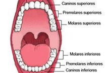 Higiene Bucal / Cuida tu sonrrisa, higiene bucal, productos, precios, comprar, ofertas...