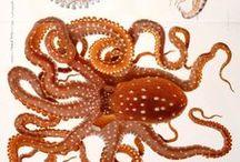 [Art] Kraken and friends