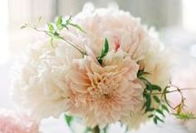 Wedding Inspiration / Here Comes... Inspiration from flowers and cakes, to gifts and dresses.
