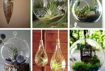 For the Garden / Garden landscaping ideas / by Jem