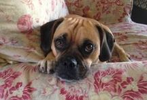 puggle / by Taylor Moore