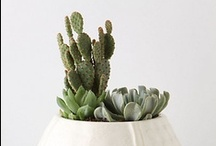Green Thumb / by Cara Lovan (Lyons)