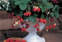 patio gardening & pots / by Ginessa Morgan
