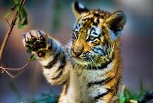 Insanely cute animals