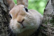 Bunny Rabbit - Kanin