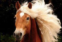 Pferde / Pferde♡♡♡♡♡♡♡♡♡♡♡♡♡♡♡♡♡♡♡♡♡♡♡♡♡♡♡♡