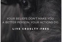 animal rights. / Tierrechte, Tierschutz und Veganismus - alles zu einem crueltyfree lifestyle