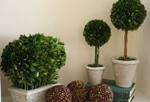 Preserved Boxwood Topiaries / Our Preserved Boxwood designs are a natural evergreen, treated to preserve the beauty of the plant which is best preserved by lightly misting once a month and should not be placed in direct sunlight…this will aid in keeping its bold color for a lifetime.