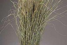 Branches/Grasses/Etc.