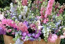 ✿ܓ    FLOWERHOLIC / flowers of all  shapes ✿ܓ  sizes ✿ܓ colours   ✿ܓtextures & seasons    / by JENNY PANNAYE