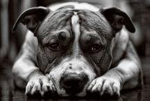 Hayvanlar / Masum, Asil ve doga
