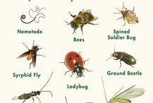 Beneficial Bugs / Invite these bugs into your garden!