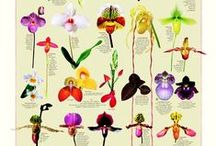 Oh my..... orchids