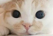 Cats / Board about cats, because who doesn't love cats? Follow for beautiful, cute, playful, or elated kitties! :3
