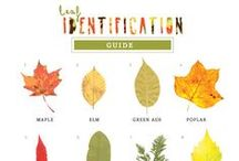 Fall Theme for Toddler / Preschool / A collection of fall related activities for 1 - 4 year olds. Note: we often combine two themes for Fall on the Farm