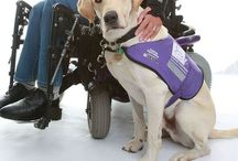 Canine Partners & more.... / ...Autism & therapy/assistance Dogs from all over the world..