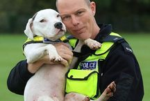 Police/Civilian working & 'Nose Dogs'.. / Police, Medical Alert,  Body search & Cadaver Dogs, Cancer Detection, Drugs & Money, from all around the world...