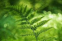 ~ the beauty of green ~