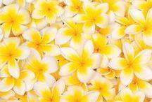 * Jaune * / Tendance déco jaune