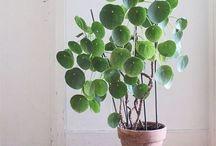 ALLIMAC indoor plants