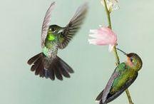 Fly Little Birds Fly