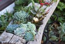 Ideas for garden etc.