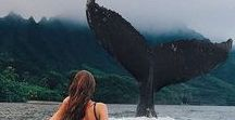 ≫  jet set mermaid.