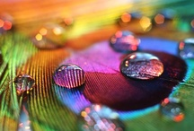COLOUR in all THINGS / The creation of colour