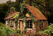 OVERGROWN and ABANDONED  / Stories lost