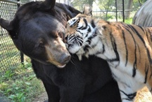 ANIMAL opposites attract