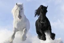 LIVING in BLACK or WHITE
