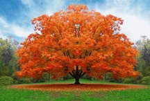 TREES in colour