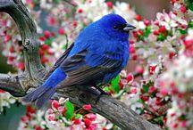 BIRDS in BLUE