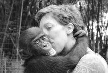 Bonobo / Bonobos in the Democratic Republic of Congo!
