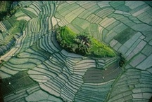 Yann Arthus-Bertrand / Famous for his incredible photographs of the Earth from above, Yann Arthus-Bertrand (1946-  ) passionately advocates for sustainability.