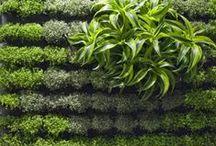 Mur végétal / parete realizzate con piante sospese alla verticale
