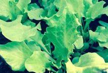 """h&p _ Seed papers seMInAMI / seMInAMI, which means """"growing seed in the soil"""" is a type of paper which apart from planting has many other uses, including writing on it or making decorations. With the sun, water and a lot of love it can turn into a new life.   seMInAMI, se mi ami seminami, la linea di carta con semi che dopo aver custodito i tuoi pensieri, inviti o decori, può essere piantata. Con il sole, l'acqua e tanto amore può germogliare a nuova vita."""