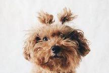 Animal / It's so fluffy I'm gonna die!