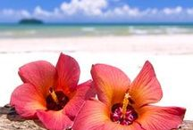 Hawaii Travel Inspiration / Tips, tricks and must do adventures while I am living in Hawaii