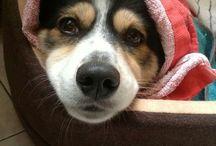 Pies / Moja Dolly