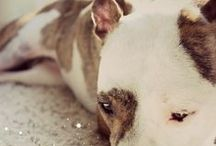 Lola The Pitty Blog / Tips, advice, pit bull advocacy, adventures, dog training, and more! Everything that you will find on our blog, www.LolaThePitty.com | #petblog #pitbull