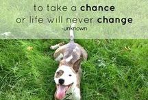 Inspiring Dog Quotes / Inspiring quotes for the love of all animals!