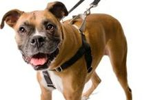 Dog products and crafts! / Dog Products, Crafts, DIY gifts, toys, etc.