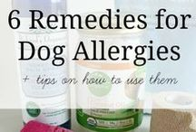 Healthy Dog / Everything related to the health of our dogs! Tips, remedies, etc.
