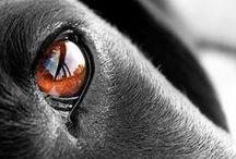 Dog Photography!