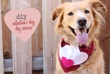 Valentine's Day / Valentine's Day favorites for you and your pet!