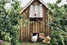 The Hen House / Chooks, Chooks and more Chooks !