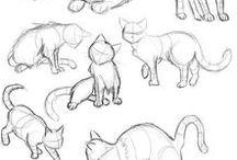 Cats tutor