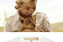Safari styl