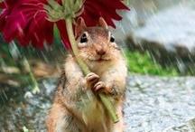 guarda chuva ecologico